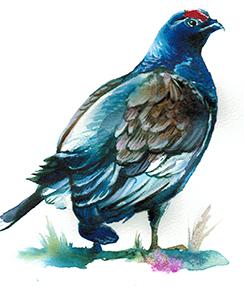Bird Kahurangi